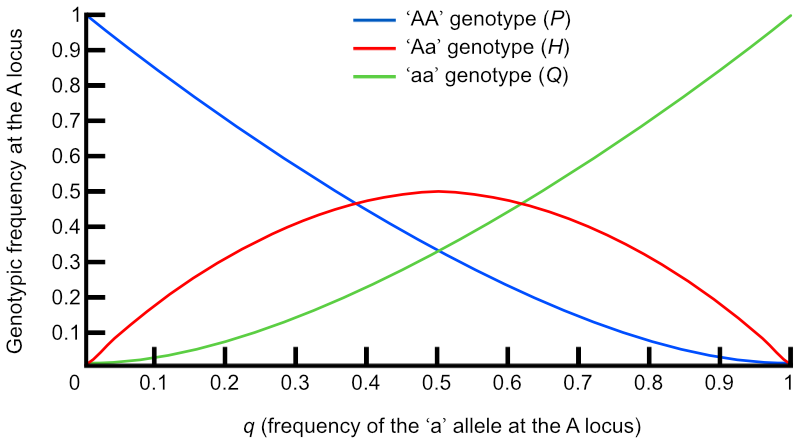 Relationships between gene and genotypic frequencies in a population