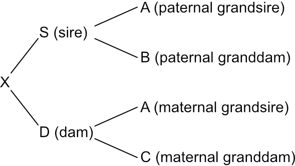 Pedigree tree showing ancestor relationships