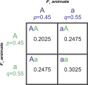 Punnett square showing genotypic frequencies from an F2 cross at the A locus